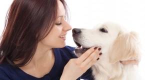 Los perros podrían detectar la diabetes