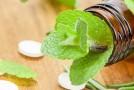 Plantas medicinales que no pueden faltar en el hogar