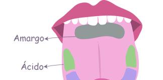 Cómo percibe los sabores tu lengua